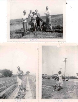 Breaking Ground In The Cabbage Patch, 1952